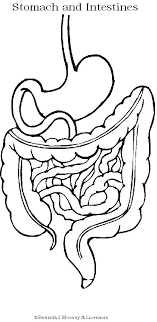Coloring Page Digestive System Use In Why People Eat Create A Belly Map Of What We