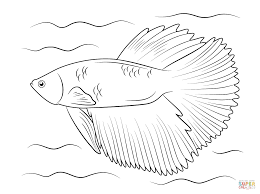 Betta Fish Coloring Page Halfmoon Free Printable Pages To Download