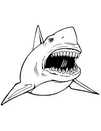 Fancy Great White Shark Coloring Pages 97 With Additional Download