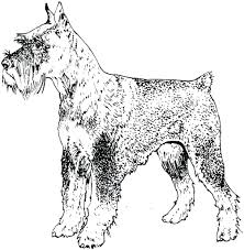 Dog Breed Coloring Pages To Print Schnauzer Page Printable Breeds Full Size