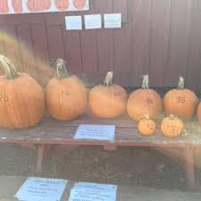 Morgan Hill California Pumpkin Patch by Rodoni Farms U Pick Em Pumpkins 14 Photos U0026 12 Reviews
