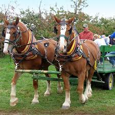 Grandville Mi Pumpkin Patches by Grand Rapids Favorite Pumpkin Patch And Horse Drawn Wagon Rides