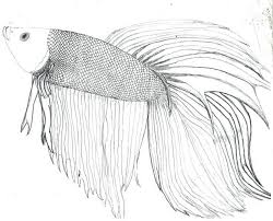 Betta Fish Coloring Sheets Beta Art And Info Pages