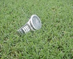 Carpet Grass Florida by Yukon Bermuda Grass Seed Turf Quality Improved Cold Tolerance