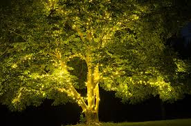 tree lights for and summer yard envy