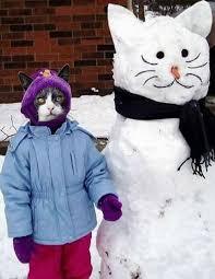 snow cat cat