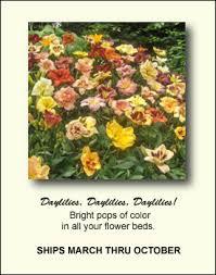 daylilies daylily bulbs iris peonies hostas ornamental