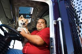 100 Red Dog Trucking Tips For Truck Drivers And Their Pets ThriftyFun