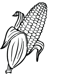 Corn Coloring Pages Extraordinary Corn Coloring Pages In Free