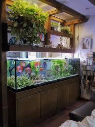 aquaristik fachgeschäft dieter queck burgdorf galerie
