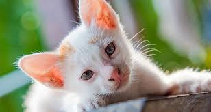 renal failure in cats how to recognize kidney disease in your cat petcoach