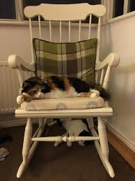 Two Cats And A Rocking Chair - Album On Imgur