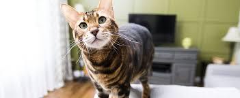 lebensraum wohnzimmer aus sicht der katze katzen magazin