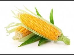 cuisiner des epis de mais cuisson épis de maïs