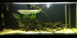 6ft Monster Fish Aquascape Adrie Baumann And Aquascaping Aqua Rebell Natural Httpwwwokeanosgrombgwpcoentuploads2012 Amazoncom Aquarium Plant Glass Pot Fish Tank Aquascape Everything About The Incredible Undwater Art Outstanding Saltwater Designs Photo Ideas Anubias Nana Petite Planted Freshwater Beautify Your Home With Unique For Large Fish Monstfishkeeperscom Scape Nature Stock 665323012
