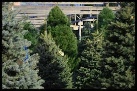 Christmas Tree Preservative Recipe by Keep Your Christmas Tree Looking Good All Season Long Wolff U0027s