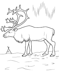 Arctic Scene Coloring Pages Animals With