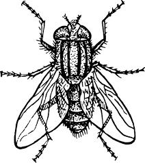 House Fly Clip Art at Clker vector clip art online royalty