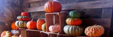 Pumpkin Farms In Southern Maryland by Wegmeyer Farms Strawberries U0026 Pumpkin Farm In Loudoun County