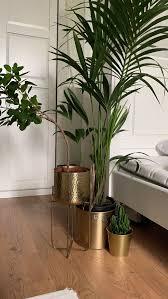 ikea pflanze