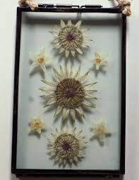 100 Flannel Flower Glass Pressed Picture Astrantia Briony Handmade Unique Pressed Flower Picture