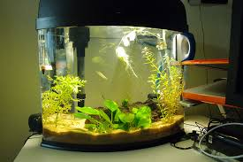 nano dwaf puffer tank restart the planted tank forum