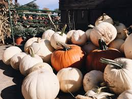 Pumpkin Picking In Chester Nj by Fall Activities Continued U2013 J I L L S A H N E R