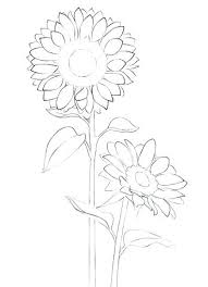 Coloring Pages Of Sunflowers Sunflower Page Free Printable Simple