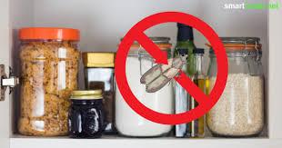 lebensmittelmotten mit hausmitteln nachhaltig bekämpfen