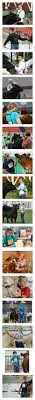 200 Best |cattle| Images On Pinterest | Showing Livestock, Fluffy ... 1021cattle6ajpg Purple Reign Cattle Company Online Sale The Pulse February 2017 Texas Longhorn Trails Magazine By A Good Place To Be Cow At Fort Worth Stock Show Animals Are Commercial And Registered Ozarks Farm Neighbor Newspaper Cattlemen Opmistic About Resumed Beef Exports To China News Blog Lautner Farms Experience The Value Best Of Southwest Shootout Overall Market Burke Hidin In Sand Steer November 2015 Graham Livestock Auction Sanctioned Shows Ijbba Iowa Junior Beef Breeds Association