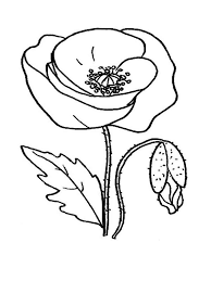 Poppy Flower Coloring Pages 13