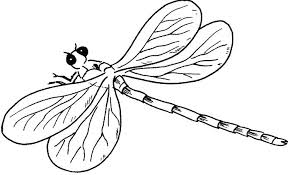 Dragonfly Coloring Pages Pictures A Young Cartoon Cute