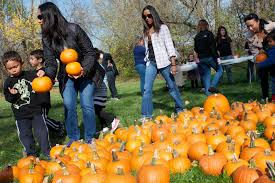 Bishops Pumpkin Farm Employment by The Weekend In Photos The Daily Gazette
