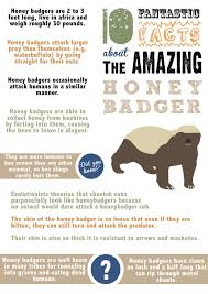 Honeybadger Informational Poster By Happy Smiley Robot On Deviantart Informative Design