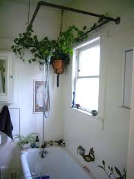Best Plants For Bathroom Feng Shui by Bamboo Plant In Bathroom Feng Shui Best Plants Ideas On Green