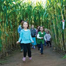 Marana Pumpkin Patch 2015 by Marana Pumpkin Patch Sponsored By Post Farms
