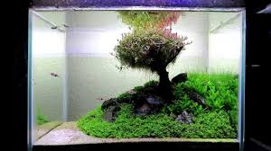 My Aquascape,