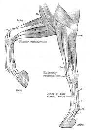 Anatomy Coloring Book Kaplan Of Animals Body