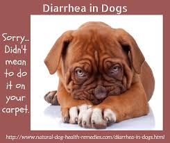 Turkey And Pumpkin For Dog Diarrhea by Treating Diarrhea In Dogs Holistically