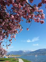 fleur et plante du lac images gratuites arbre plante ciel lac été marche