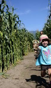 Devine Pumpkin Patch Harrodsburg Ky by Get Lost For Hours In America U0027s Best Corn Mazes Roadtrippers