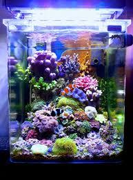 aquarium nano eau de mer a particular italian nano cube reef central community