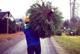GeekWires Kurt Schlosser Carries A Freshly Cut Tree From Farm Near Seattle During Christmas Past GeekWire Photo