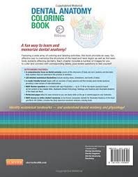 Best Pdf Musculoskeletal A Awesome Projects Dental Anatomy Coloring Book Free Download