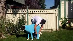 Do All Dogs Shed by How To Put On And Take Off The Shed Defender Youtube