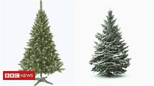 Most Realistic Artificial Christmas Tree Contemporary Trees Real Or Fake Bbc News Model