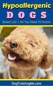 List Of Non Shedding Hypoallergenic Dogs by Hypoallergenic Dogs Breed List U0026 All You Need To Know