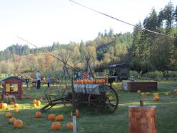Pumpkin Patch Portland by Pumpkin Patch Portland Hillsboro Forest Grove Banks Seaside
