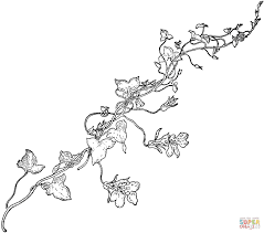 Sweet Pea Vine Coloring Page Free Printable Pages