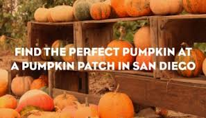 Pumpkin Patch Near Green Bay Wi by Top 10 San Diego Budget Friendly Fall Activities For Kids